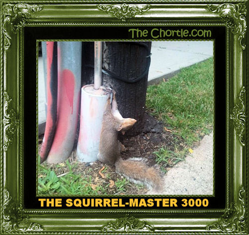 The squirrel-master 3000