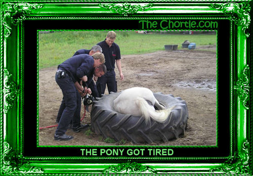 The pony got tired