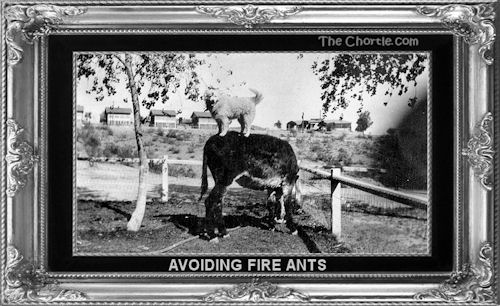 Avoiding fire ants