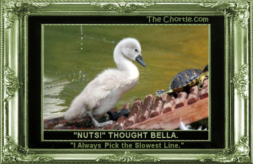 """Nuts!"" thought Bella. ""I always pick the slowest line."""