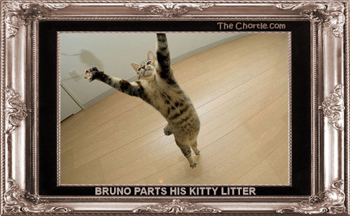 Bruno parts his kitty litter