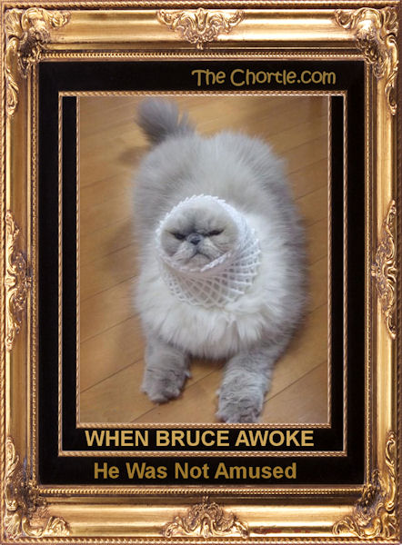 When Bruce awoke, he was not amused