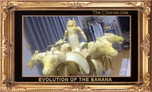 Evolution of the banana