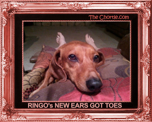 Ringo's new ears got toes