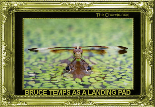 Bruce temps as a landing pad