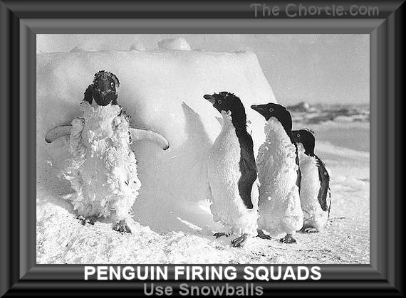 Penguin firing squads use snowballs.