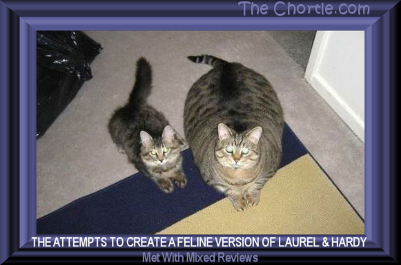 The attempts to create a feline version of Laurel and Hardy met with mixed reviews.