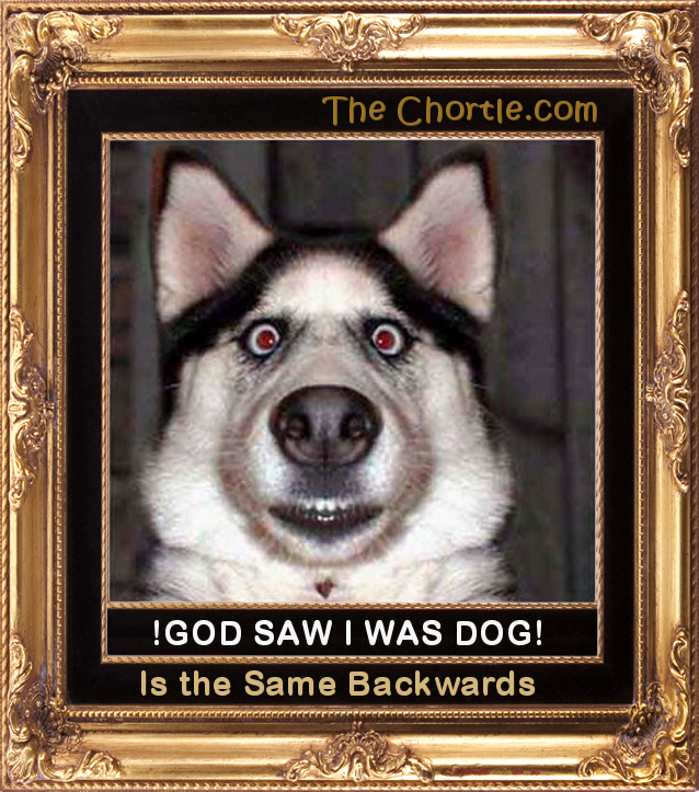 ! God Saw I Was Dog !