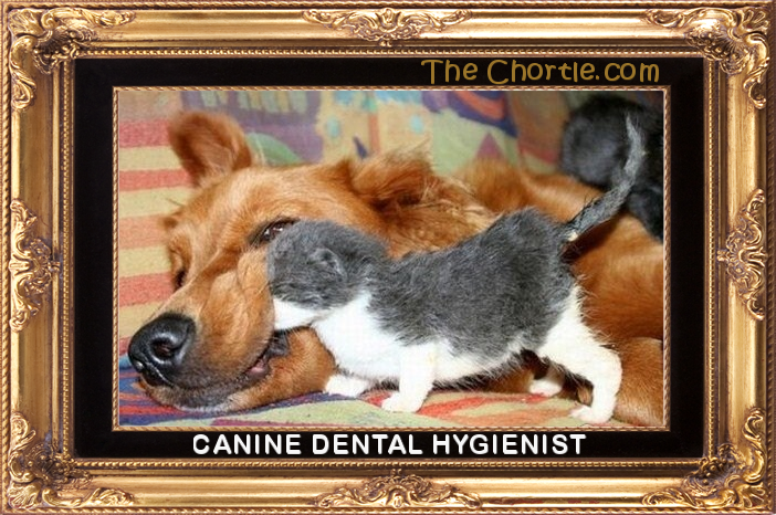 Canine dental hygienist.