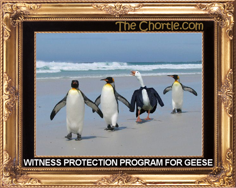 Witness protection program for geese.
