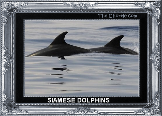 Siamese dolphins